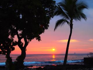Dolphins/Whales from Lanai 1 bd + loft Ocean View - Kailua-Kona vacation rentals