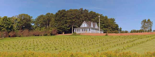 Young Vineyard - Percy Hill Vacation Home - Montague - rentals