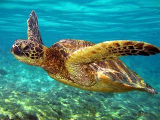 Turtle House - Keaau vacation rentals