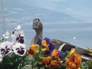 Divina Vita Bed & Breakfast Varenna - Varenna vacation rentals