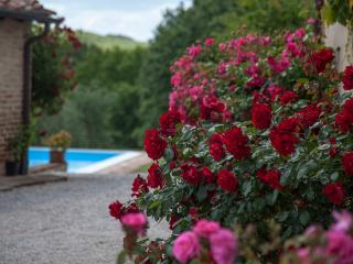 5 BDR villa, pool,WiFi,AC in Siena countryside - Siena vacation rentals
