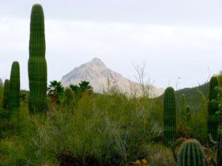 Beautiful 4BR/2BA Home - Tucson Catalina Foothills - Southern Arizona vacation rentals
