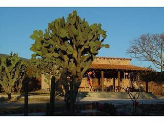 Blue winter skies over the dining lodge at the ranch. - B & B Rancho Pitaya - Oaxaca - rentals