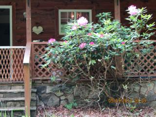 Pura Vida Cottage ~ the Essence of Life - Bakersville vacation rentals