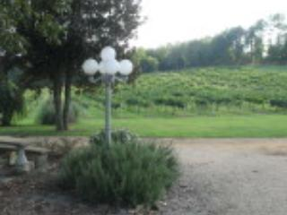 Wills Creek Vineyards - Wills Creek Vineyards at the Windmill - Alabama - rentals