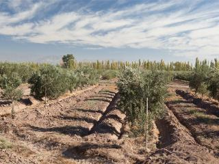 stay at an olive farm with resto bar and farm - General Lavalle vacation rentals