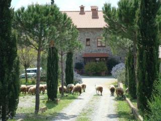 Casa San Carlo - apartment Città della Pieve - Monteleone d'Orvieto vacation rentals