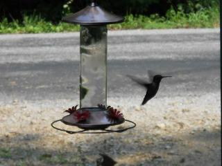 Hummingbird Haven ~ a  rustic cabin you will love. - Fairview vacation rentals
