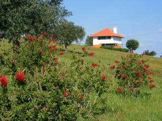 Lovely 2 bedroom House in Ferreira do Alentejo - Ferreira do Alentejo vacation rentals