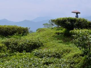 Fagu Tea Estate Heritage Bungalow - West Bengal vacation rentals
