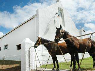 Converted horse stable - self catering cottage - B - Napier vacation rentals