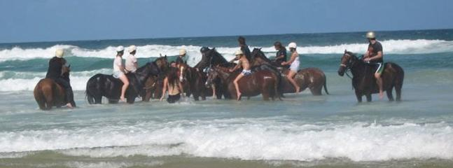 Horse surfing at Lennox head beach at Pegasus park equestrian centre www.pegasuspark.com.au 66871446 - 1 bedroom self contained cabin at Pegasus Park - Byron Bay - rentals