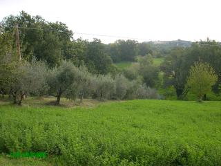 B&B La casa di campagna in az. agricola - Todi vacation rentals