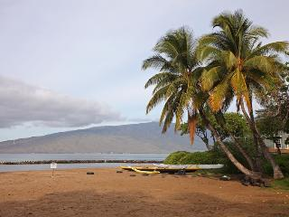 Plumerias in Paradise: < 300 FOOTSTEPS TO BEACH!!! - Kihei vacation rentals