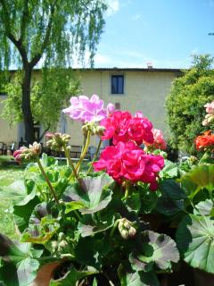 Poderuzzo B&B close to Florence - San Piero a Sieve vacation rentals
