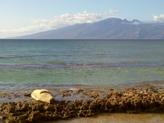 New Listing booking for summer 30 day minimum - Lahaina vacation rentals
