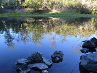 Fabulous Retreat on Russian River in Healdsburg - Healdsburg vacation rentals
