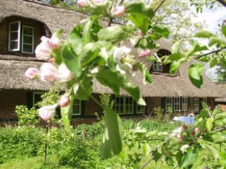 "Garden in springtime - Holiday Apartement ""Pleasure""  in old House - Blunk - rentals"