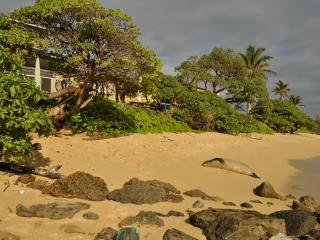 Ocean Sun at Tiki Moon Villas - Ocean Front - Laie vacation rentals