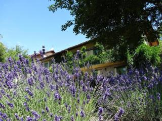 Comfortable new studio in an Italian Lavenderfarm - Spigno Monferrato vacation rentals