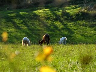 Agritrismo Barbugli-locanda degli elfi - Emilia-Romagna vacation rentals