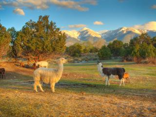 Mountain Goat Lodge B&B  and Dairy Goat Farm - Salida vacation rentals