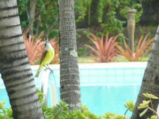 Casa Andrea - Ipioca Maceio-AL Brazil - State of Alagoas vacation rentals