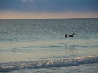 Las Olas 303 - Penthouse Camila - Playa del Carmen vacation rentals