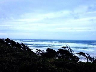 Pet-friendly oceanside studio 1/2 mile from beach! - Newport vacation rentals