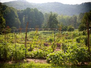 Wyndham Smoky Mountains 1 Bed 1 Bath - Sevierville vacation rentals