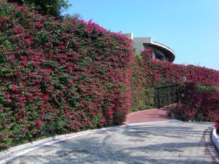 Casita De Cielo (Apartment) - Manzanillo vacation rentals