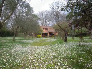 Country house near Bracciano's lake, 40km to Rome - Trevignano Romano vacation rentals