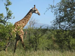 Bush Camp #70 Ndlovumzi Reserve  Hoedspruit - Botswana vacation rentals