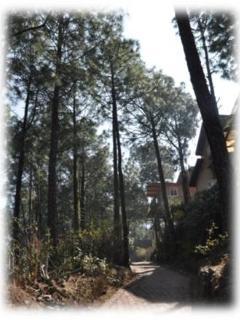 Wind Chimes, 3 Bedroom Hill Villa,  Kasauli Hills - Kasauli vacation rentals
