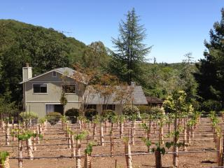 Heart of Sonoma Wine Country, Vineyard & Hot tub - Glen Ellen vacation rentals