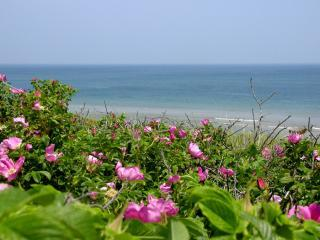 THE BEAUTY OF THE SPECTACULAR CAPE COD NATIONAL SEASHORE - A Cape Cod Getaway - Walk to Sea Street Beach - Dennis Port - rentals