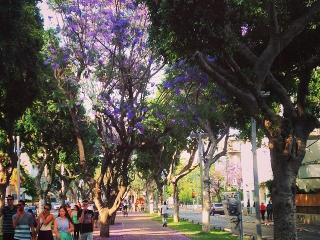 Tlv beach, market, Shenkin special price - Tel Aviv vacation rentals