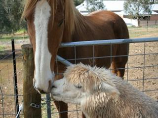 Resident Animals - Self-Contained Unit near award Winning Wineries - Perth - rentals