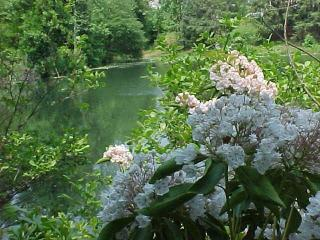 Charlottesville Lake and Mtn B and B - Aldan vacation rentals