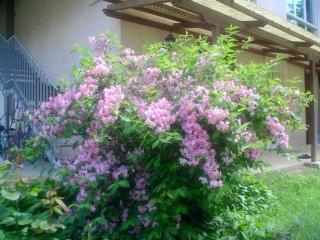 Bric San Lorenzo - Poirino vacation rentals