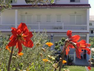 Apartment  Daisy ( 6+3)  Paradise Island of RAB - Island Rab vacation rentals