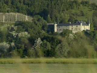 Chateau 10BD Groups Welcome French Alps Summer - Coise-St.-Jean-Pied-Gauthier vacation rentals