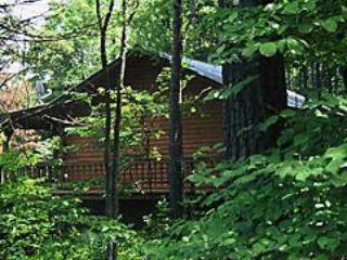 Secluded Mountain Top Cabin 1: Enchanted Forest - Image 1 - Eureka Springs - rentals