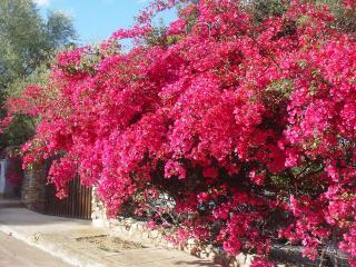 Bellavista da Villa Garden: 300m. mare  Wi Fi free - Sardinia vacation rentals