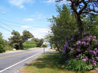 Sunny Beach Road Home. Easy Walk to Nauset Beach. - East Orleans vacation rentals