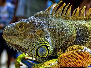 Dragon Iguana Lives Here !! .....Well Ok Next Door - Playa Flamingo vacation rentals
