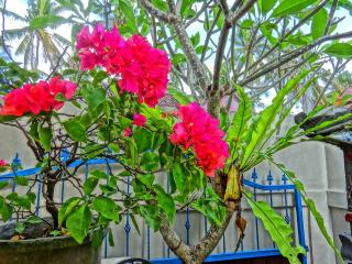 casa romantico canggu - Canggu vacation rentals