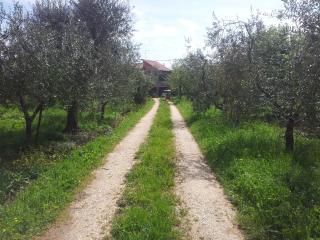 1 bedroom Condo with A/C in Soriano nel Cimino - Soriano nel Cimino vacation rentals
