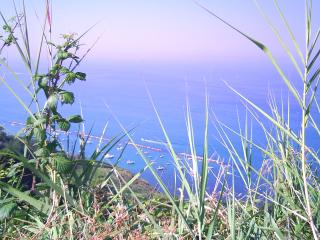 Low cost room to rent in my apartment by the sea - Fano vacation rentals