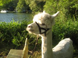 Alpacaville Farm Retreat Oasis - Pembroke vacation rentals